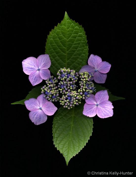 Flower Wisdom 92