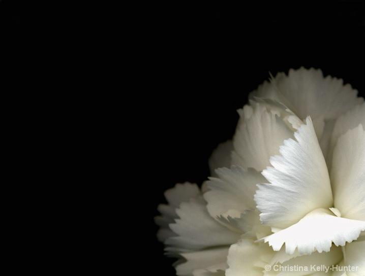 Flower Wisdom 94