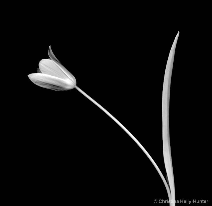 Flower Wisdom 104