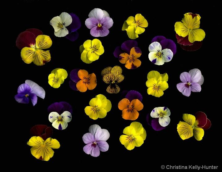 Flower Wisdom 83