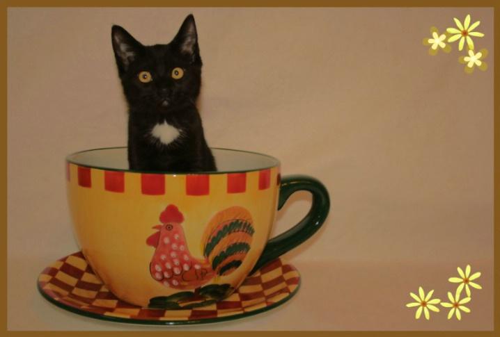 Sweet-Tea!