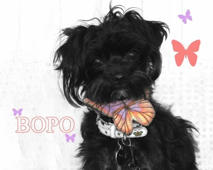Portrait Of BoPo