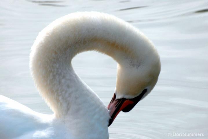 Swan, Palm Desert, CA 2008