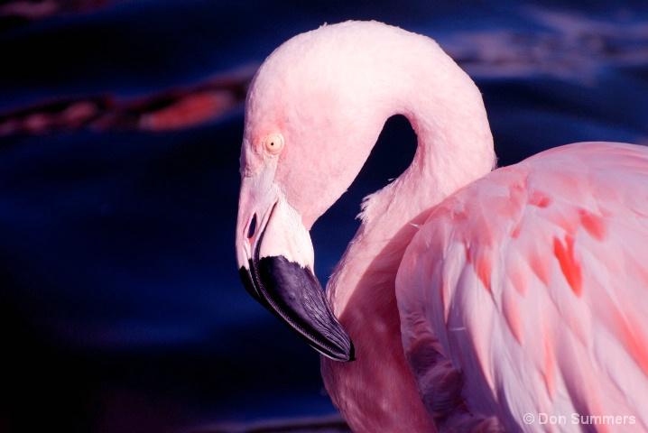 Flamingo, Palm Desert, CA 2008