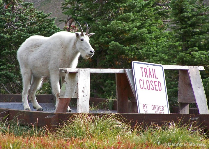 By Order of the Goat,  Glacier NP