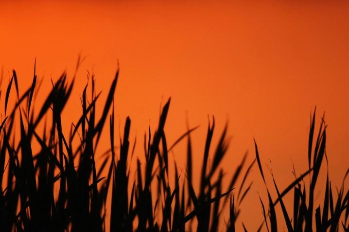 Marsh Sundown
