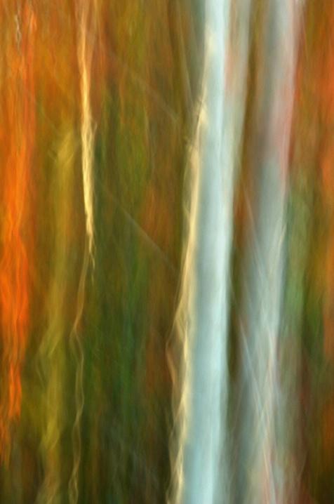 Pocomoke Forest Falling Light