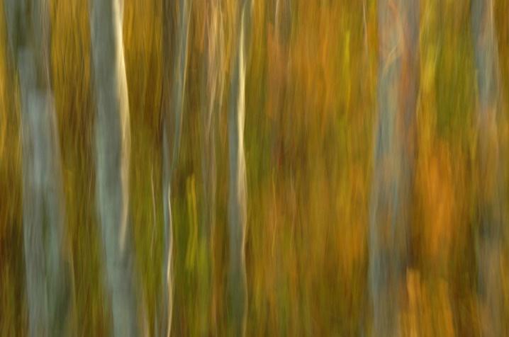 Pocomoke  Forest Light