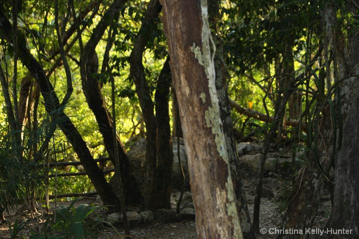 Chitzen Iza Trees 2