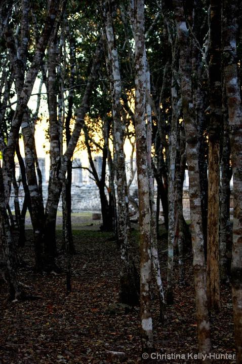 Chitzen Iza Evening Trees