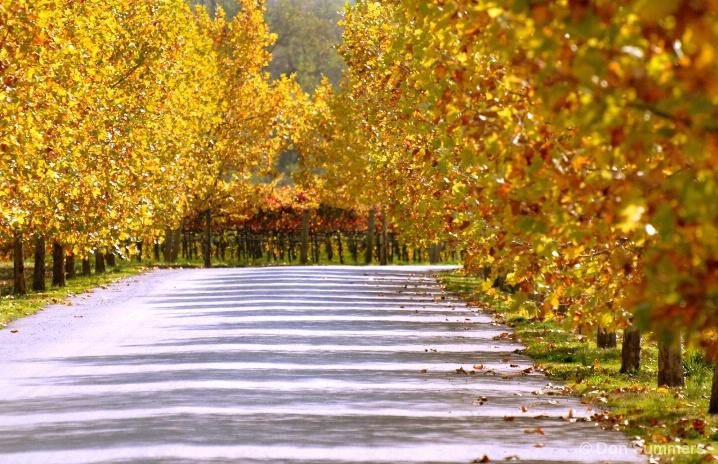 Autumn In The Wine Country, Healdsburg, CA 2007
