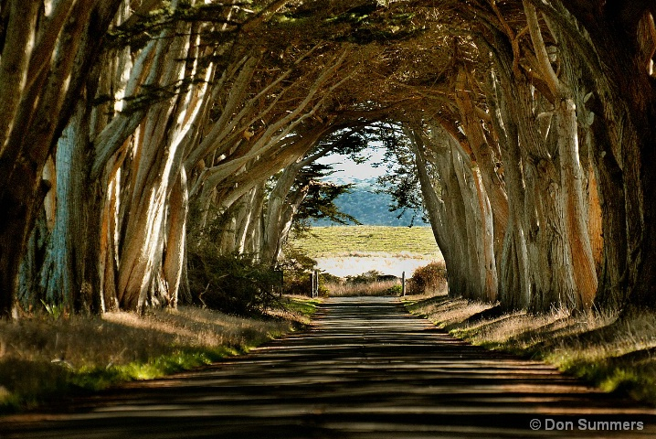 Cypress Tree Lane, West Marin, CA 2007