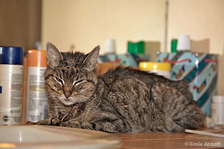 My bathroom kitty Tazmania
