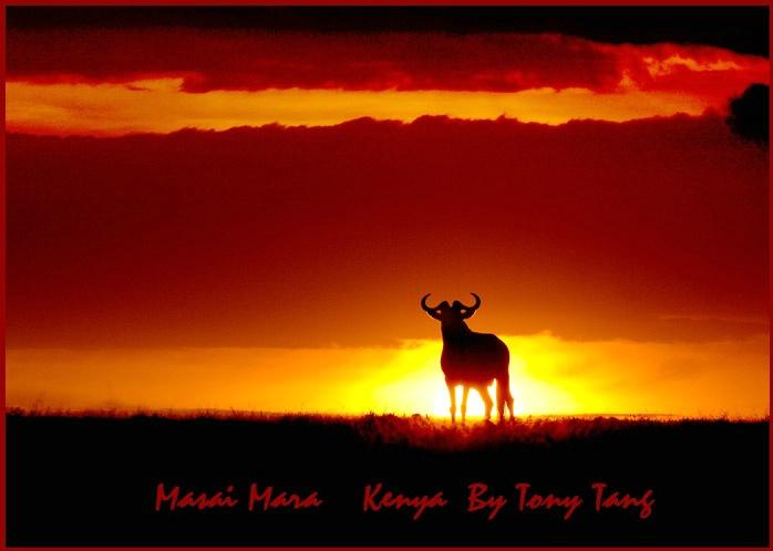 Masai Mara Kenya Sunset - Wildeerbeest