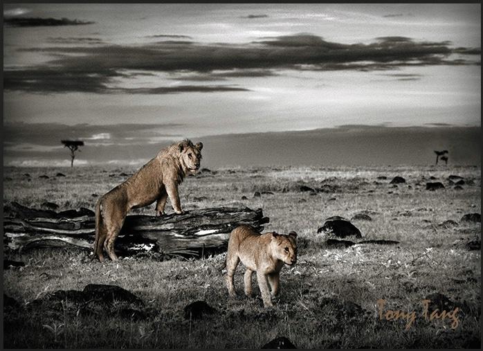 Masai Mara morning lookout