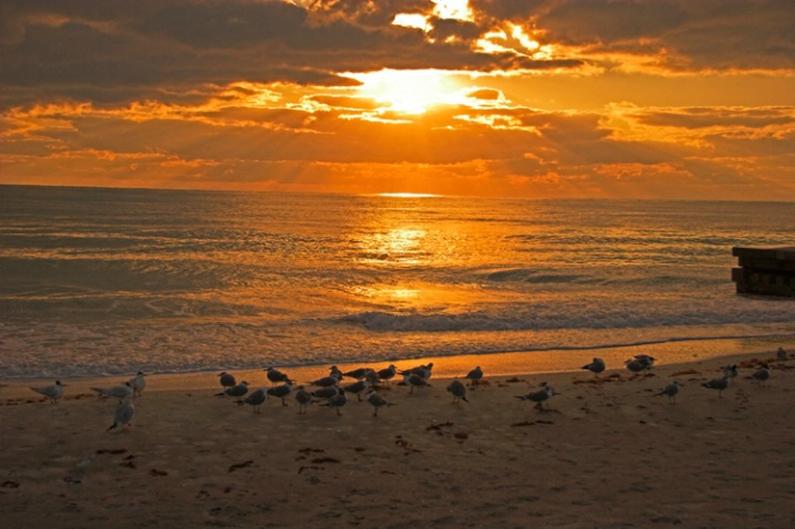 Gulls in the sunset