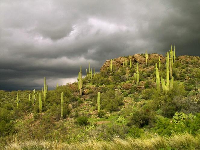 Just North of Phoenix