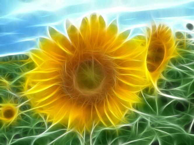Electric Sun Flower