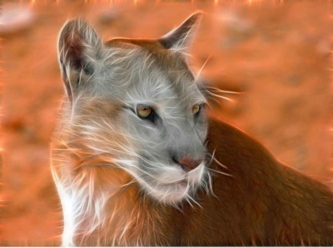 Altered Cougar 4
