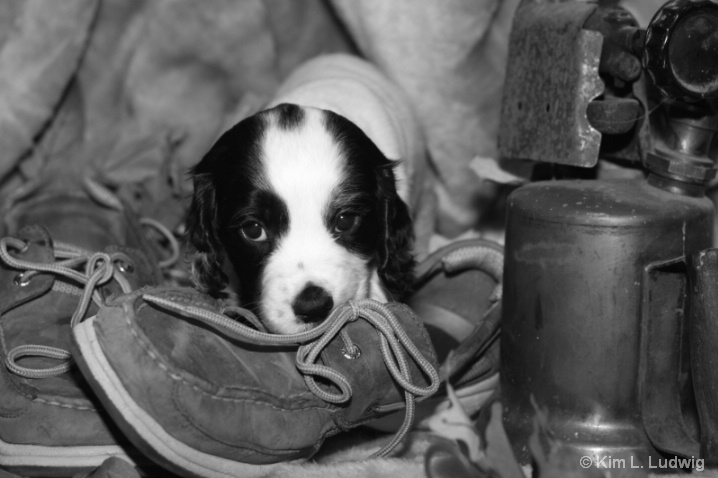 Shoe Puppy