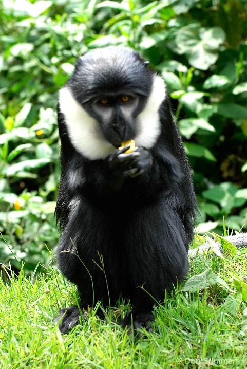 Gibbon On Road To Burundi 2007
