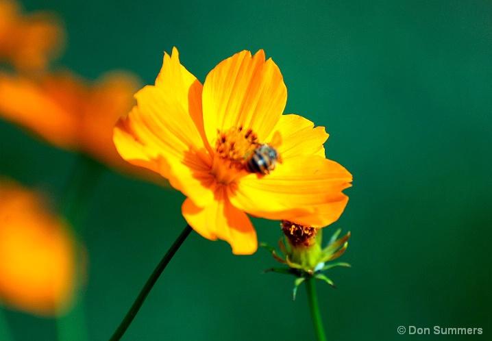 Rwandan Daisy & Bee, 2007