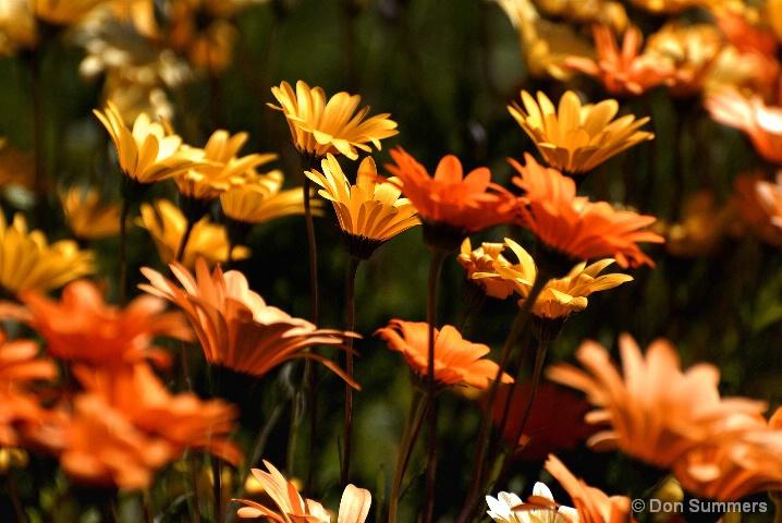 Wildflowers, Napa, CA 2008