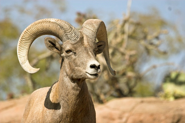Big Horn Tucson