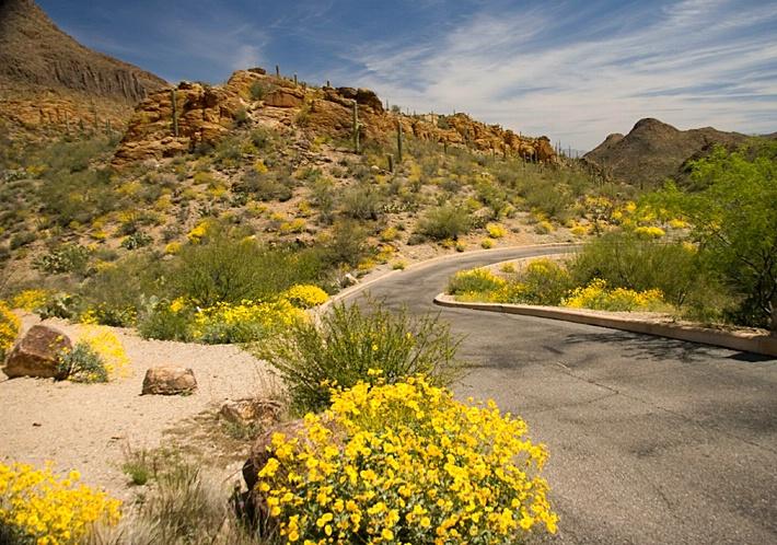 Tucson Gold