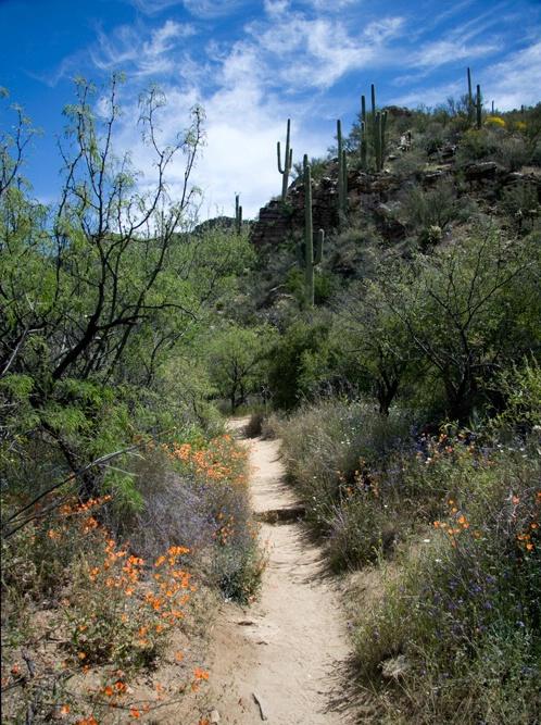 Tucson in Bloom