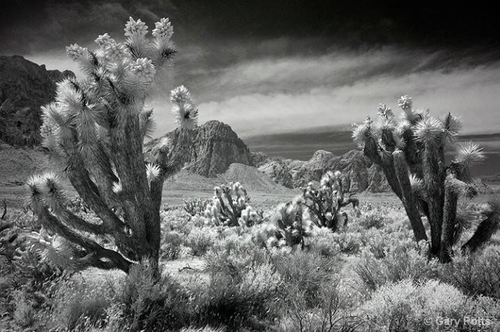 Southwest Monochrome #3