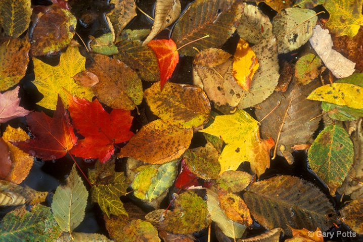 Color It Autumn