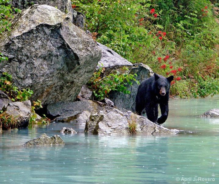 River Stroll