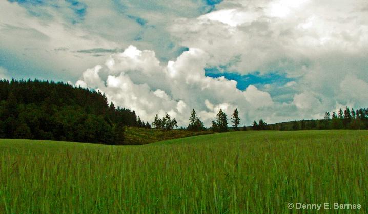 Sea of Green, Oregon