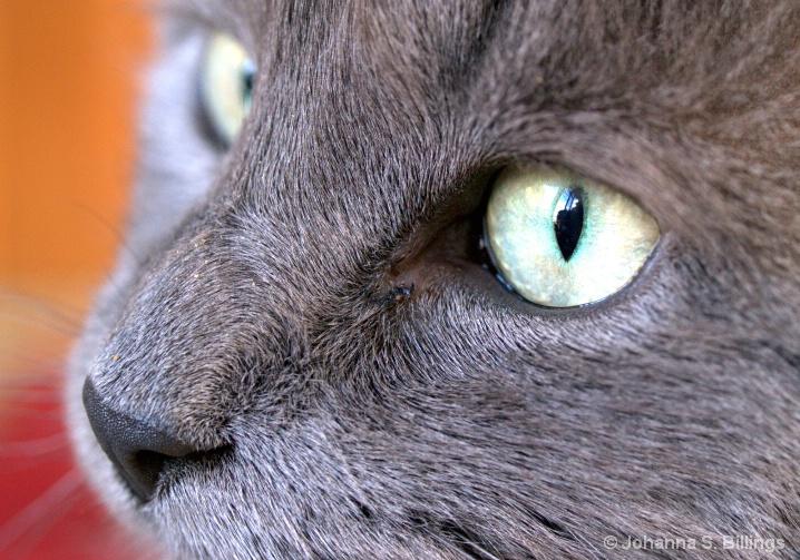 Fuzzy Gray Face
