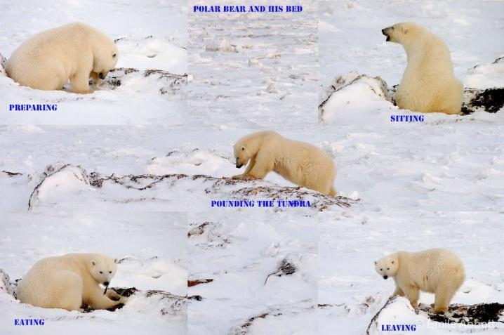 STORY OF THE POLAR BEAR BED