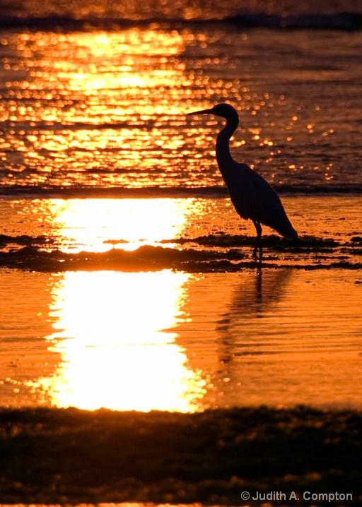 golden silhouette II