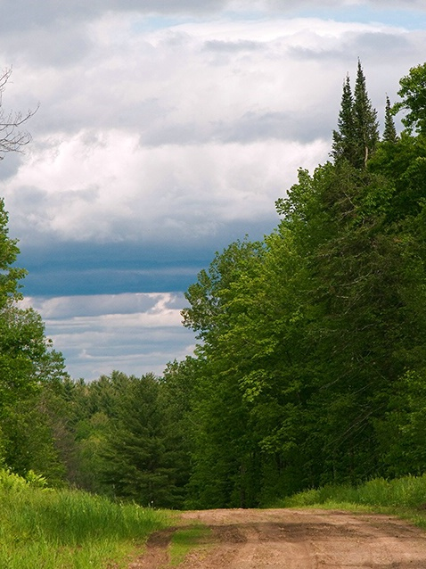 Driving Through the Northwoods