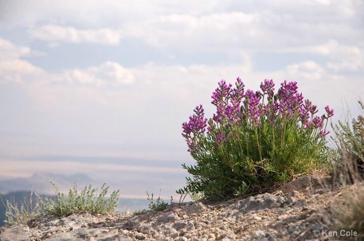 Mountaintop Flowers