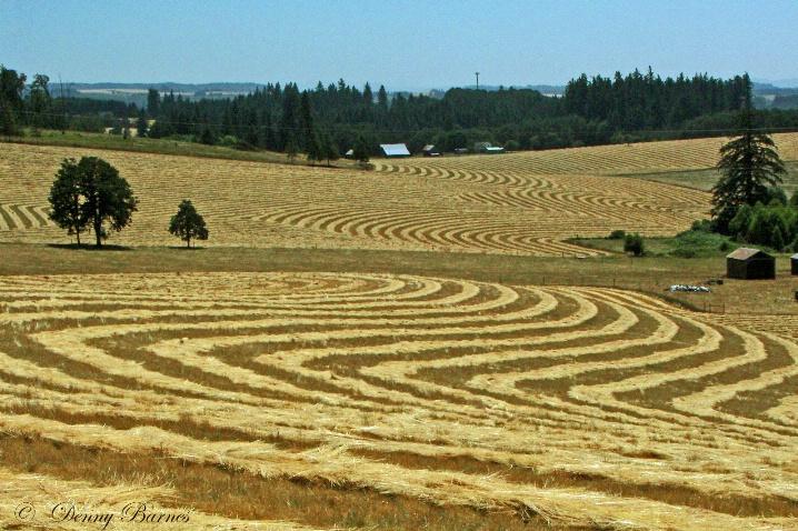 All in a Row, Oregon