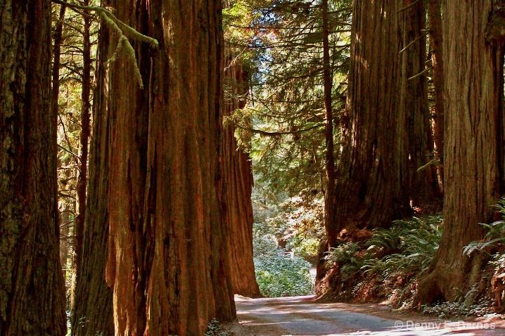 Jedediah Smith Redwood State Park, CA