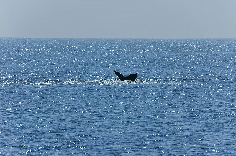 w43 Whale watch, Gloucester,MA