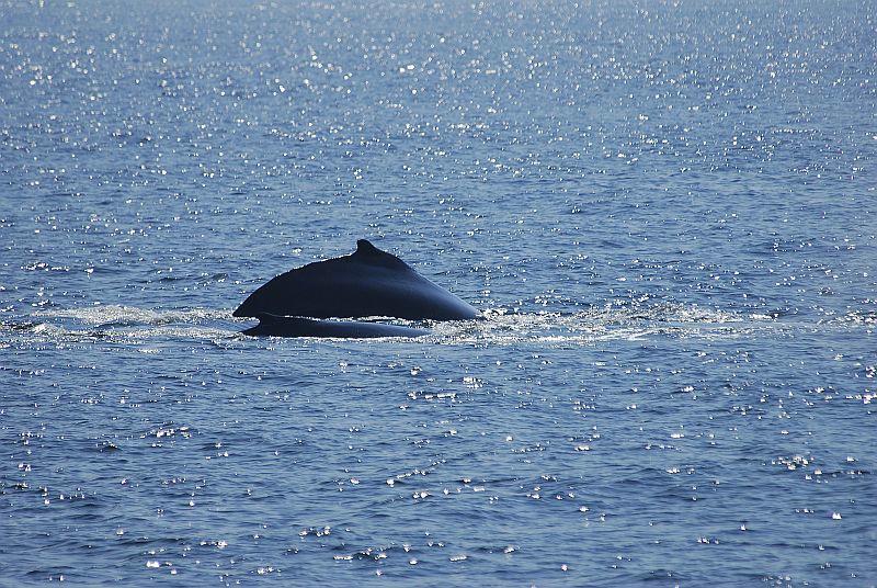 w44 Whale watch, Gloucester,MA