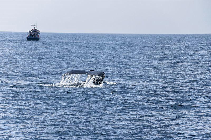 w45 Whale watch, Gloucester,MA
