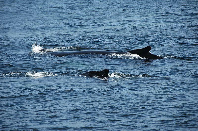 w56 Whale watch, Gloucester,MA