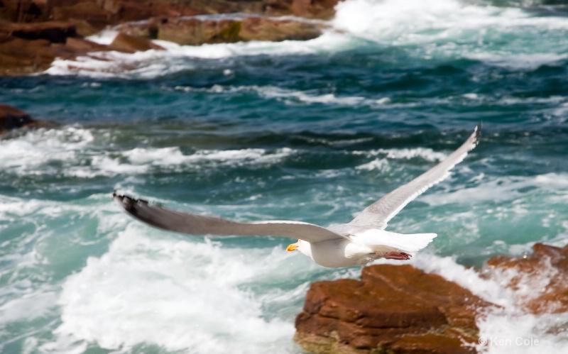 Seagull flying over surf