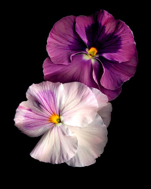 031mixedflowers