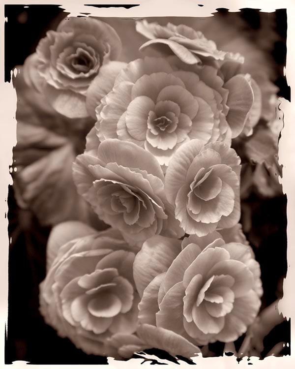 048mixedflowers
