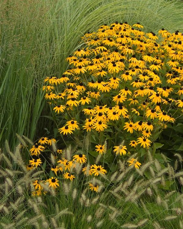 016mixedflowers