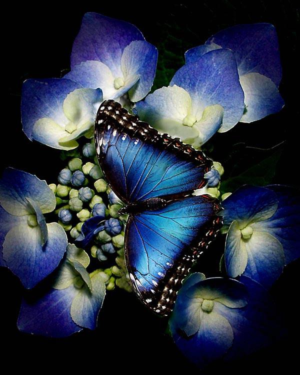 012butterfly